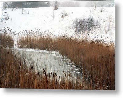 Winter Gold Metal Print by Terence Davis