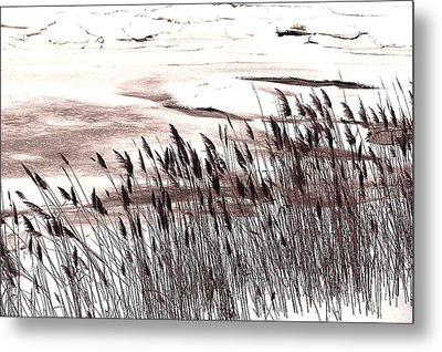 Winter Grasses Metal Print