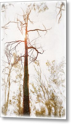 Winter In The Woodlands Metal Print by Erica Horsley