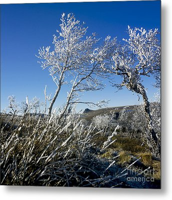 Winter Landscape.  Auvergne. France Metal Print by Bernard Jaubert
