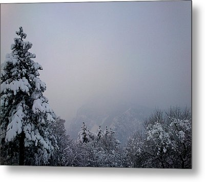 Metal Print featuring the photograph Winter by Lucy D