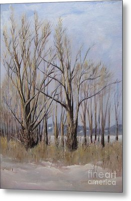 Winter Maples Metal Print by Ronald Tseng