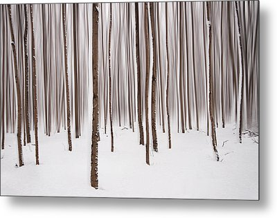 Winter Metal Print by Mircea Costina Photography