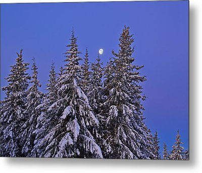 Metal Print featuring the photograph Winter Night by Michele Cornelius