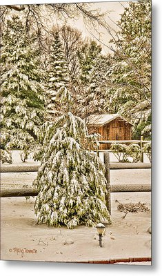 Metal Print featuring the photograph Winter Pine by Mary Timman