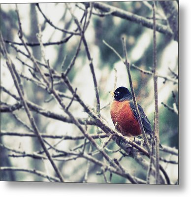 Metal Print featuring the photograph Winter Robin by Robin Dickinson