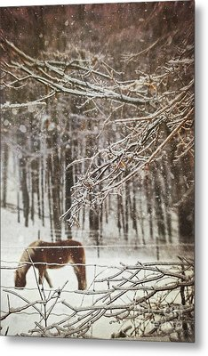 Winter Scene With Horse Grazing In Wooded Pasture Metal Print by Sandra Cunningham