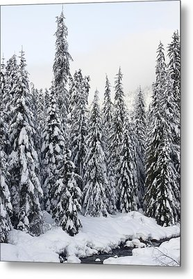 Winter Snow Scene Metal Print by Sylvia Hart