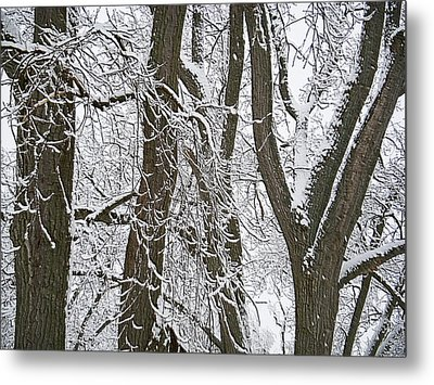 Winter Trees  Metal Print by Aimee L Maher Photography and Art Visit ALMGallerydotcom