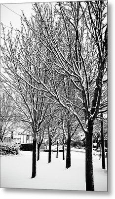 Winter Trees Metal Print by Chris Barber
