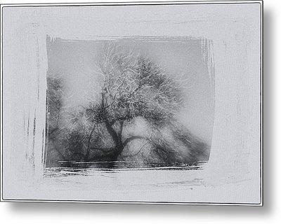 Winter Trees Metal Print by David Ridley
