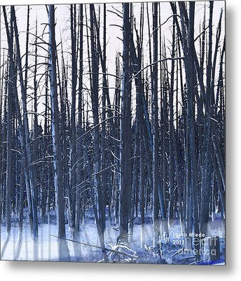 Winter Trees Metal Print by Artist and Photographer Laura Wrede