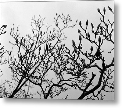 Metal Print featuring the photograph Winter Trees by Luis Esteves