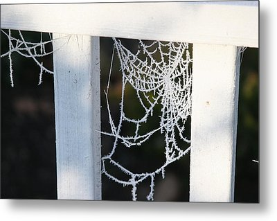 Winter Web Number Two Metal Print