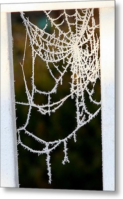 Metal Print featuring the photograph Winter Web by Paula Tohline Calhoun