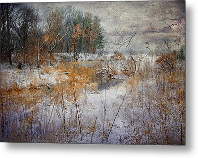 Metal Print featuring the photograph Winter Wonderland by Mary Timman