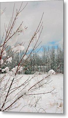 Winter Woods Metal Print by Joann Vitali