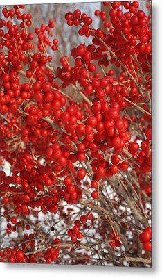 Winterberries Metal Print by Michael Flood
