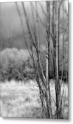 Metal Print featuring the photograph Winters Branch by Kathleen Grace