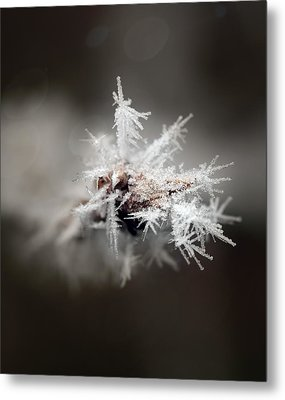 Winters Frost Metal Print by Cherie Duran