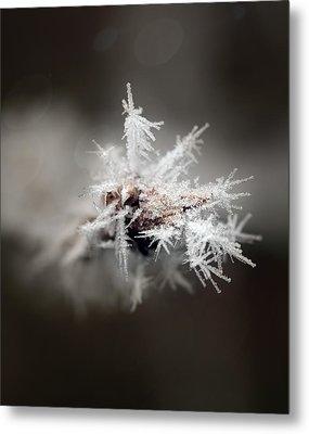 Winters Frost Metal Print