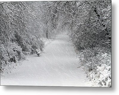 Metal Print featuring the photograph Winter's Trail by Elizabeth Winter