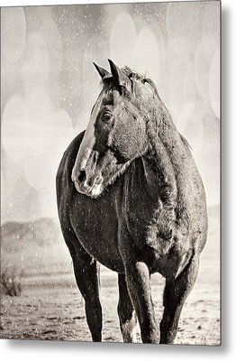 Wintery Ranch Horse Metal Print by Megan Chambers