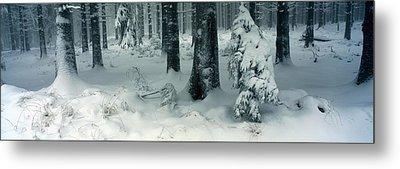 Wintry Fir Forest Metal Print by Ulrich Kunst And Bettina Scheidulin