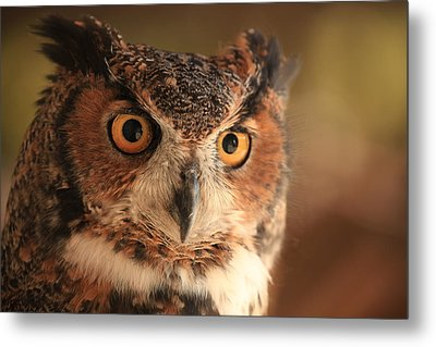 Metal Print featuring the photograph Wise Old Owl by Doug McPherson