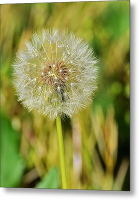 Wishes Metal Print by Mary Zeman