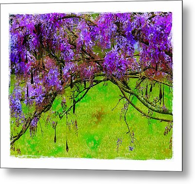 Metal Print featuring the photograph Wisteria Bower by Judi Bagwell