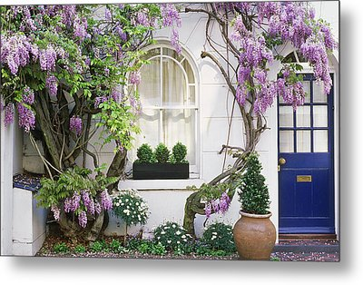 Wisteria Climbing Up Wall Of House With Window Box Metal Print by Linda Burgess