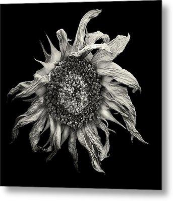 withered Sun  Metal Print by Jaromir Hron