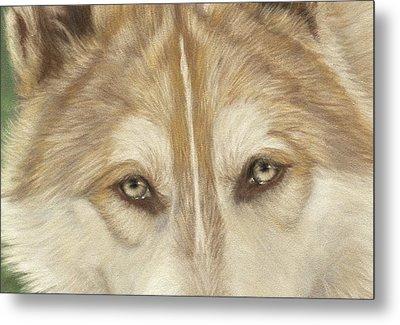 Wolf Eyes Metal Print by Teresa LeClerc