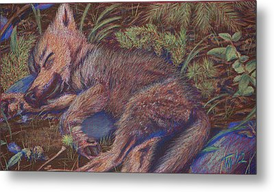 Wolf Pup Napping Metal Print by Thomas Maynard