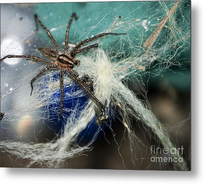 Wolf Spider Eating Metal Print by Art Hill Studios