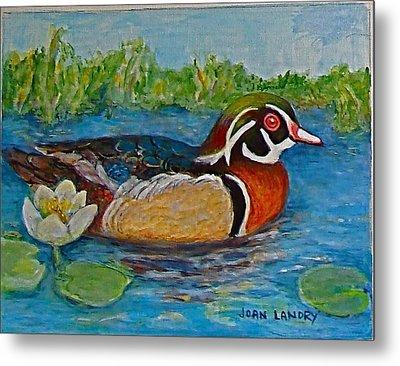Wood Duck Metal Print by Joan Landry