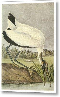 Wood Stork Metal Print by John James Audubon