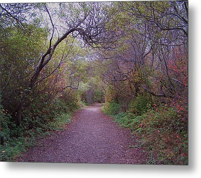 Metal Print featuring the photograph Wooded Trail by Christine Drake