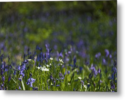 Woodland Flowers Metal Print by Trevor Chriss