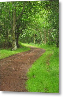 Woodland Track Metal Print by Martin Blakeley