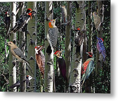 Woodpecker Collage Metal Print by David Salter
