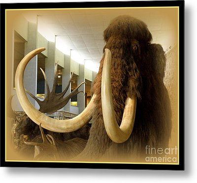 Wooly Mammoth Metal Print by Lainie Wrightson