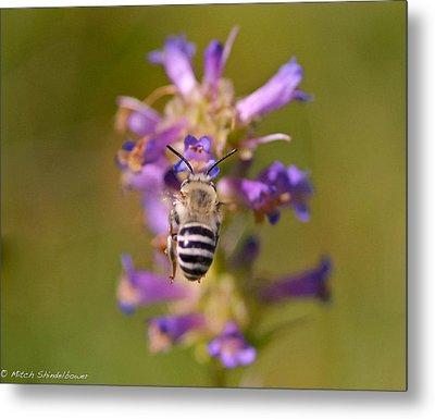 Worker Bee Metal Print by Mitch Shindelbower