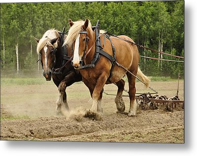 Working Horse Metal Print by Conny Sjostrom