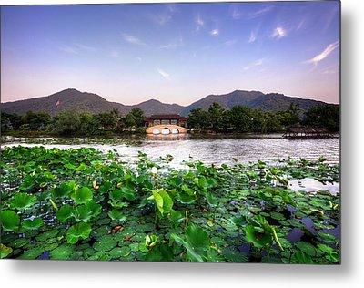 Xianghu - Lotus (xiaoshan) Metal Print by Andy Brandl