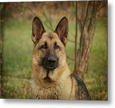 Yahtzee - German Shepherd Metal Print by Sandy Keeton