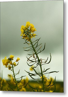 Yellow And Grey Metal Print by Jacqui Collett