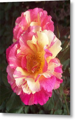 Yellow And Pink Rose Metal Print by Lisa Williams