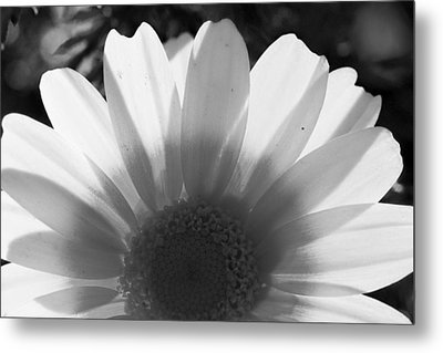 Yellow And White Flower Metal Print
